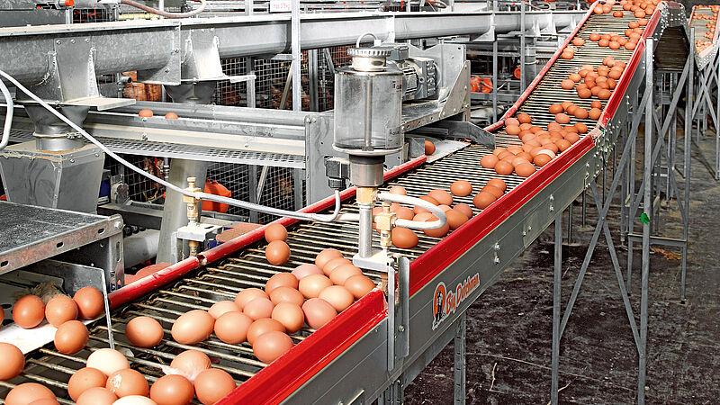 Eieren verzamelen