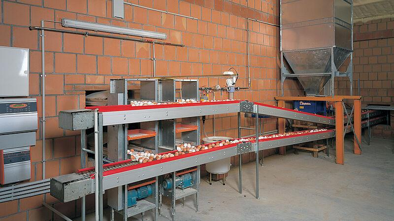 Eieren verzamelen in de pluimveestal