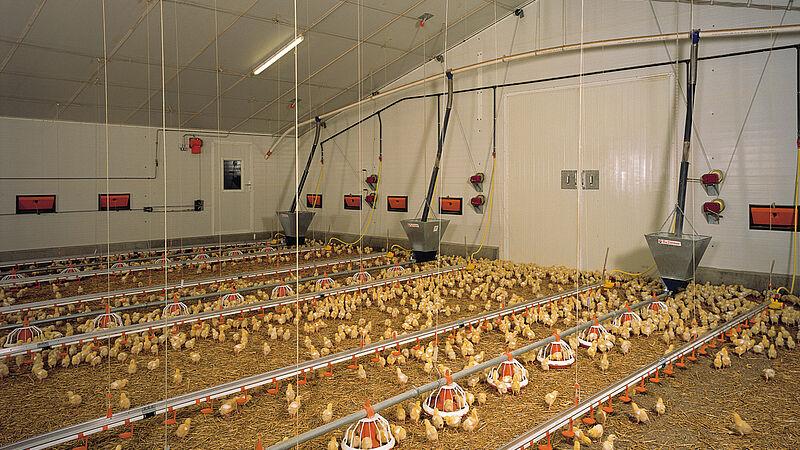 Pluimveestal voor de vleeskippenhouderij