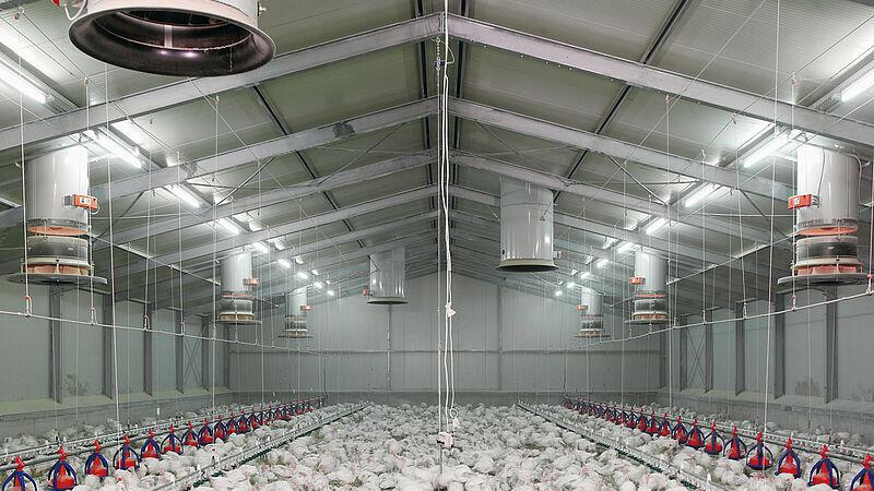 Moderne stalinrichtingen: ventilatiekanaal Fumus voor een gezond stalklimaat