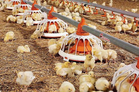 Voerpan FLUXX voor de vleeskippenhouderij